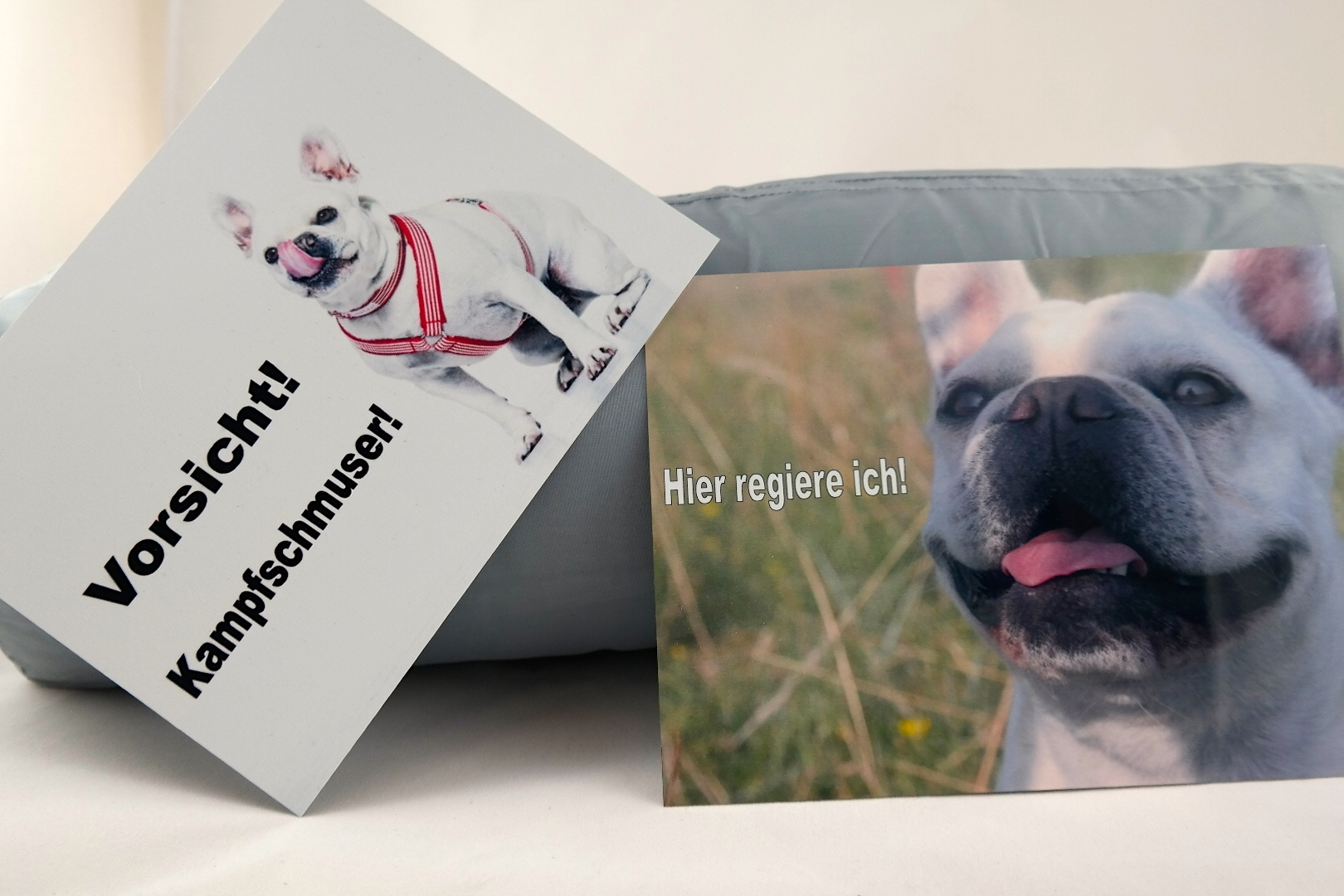 products we love Fiffibene Hunde Produkte