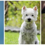 BlogDog September: Wählt euren Favoriten!
